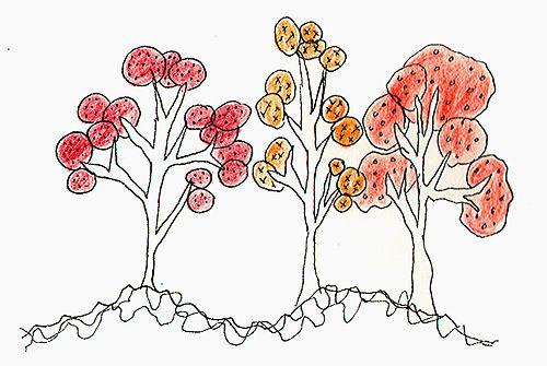 Dawns journal trees