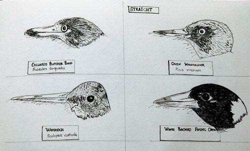 Four bird headsl ow res