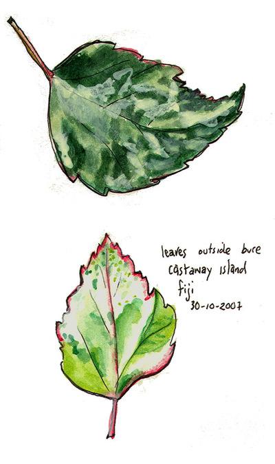 Castaway_leaves