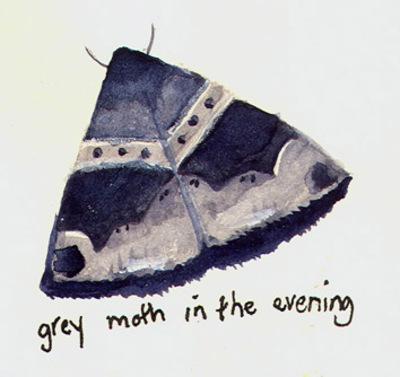 Castaway_moth