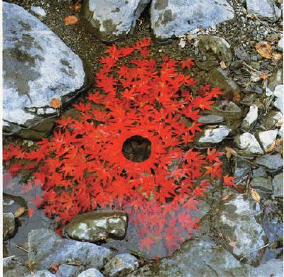Ag_red_leaves