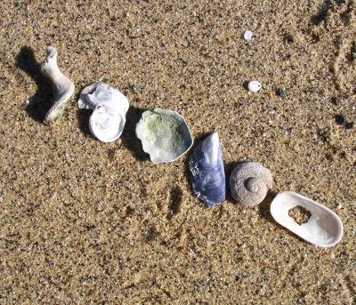 Diagonal_shells