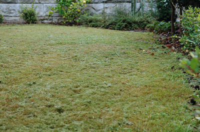 Lawn_after