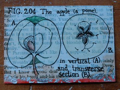 Pome_apple_atc_feb_2007