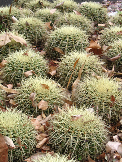 Spiky_things